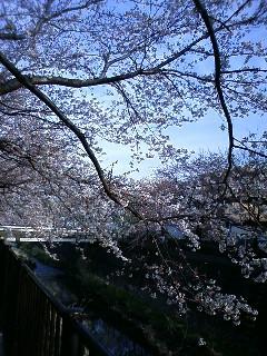 一気に春模様。